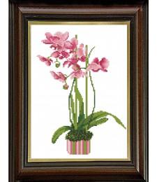 Розова орхидея 1:1